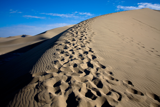 The well-traveled path to the highest dunes.