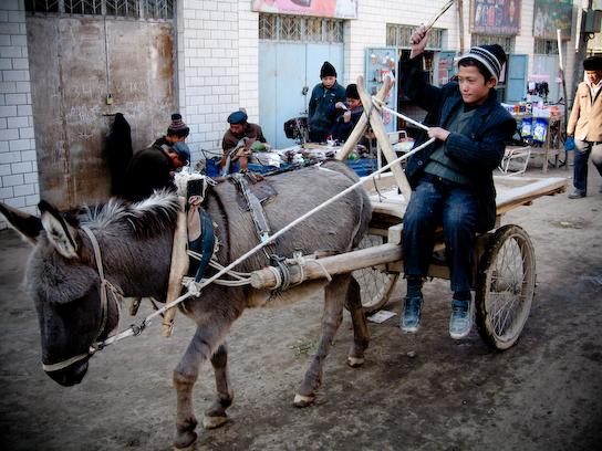 Every kid dreams of having a donkey.