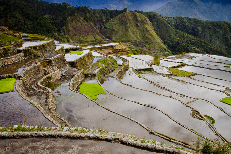 Getting the rice terraces ready for planting.