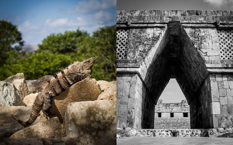 Big pappa iguana; Cuadrángulo de las Monjas, Uxmal