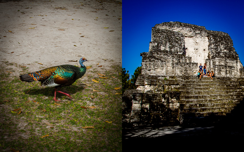 Local turkey; More ruins at Tikal.