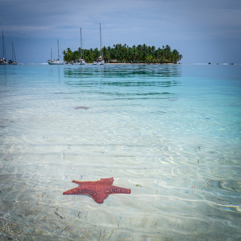The island was surrounded by starfish. Yes, you can swim over to that other island.